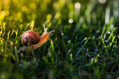 going home (auntneecey) Tags: snail goinghome 365the2018edition 3652018 day262365 19sep18