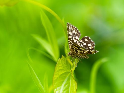 Een klein dagactief motje - small moth