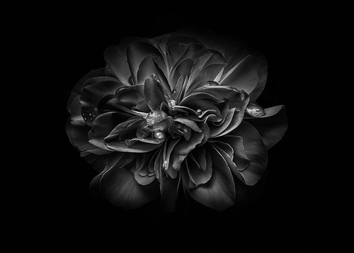 Backyard Flowers In Black And White 67