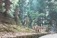 2018 Nara Trip (Nosan C.) Tags: ansoncheng916 sonya7s sigma35mmf14dghsmart nara japan