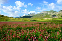 Flowers in Pian Grande (annalisabianchetti) Tags: mountains montagne paesaggio landscape rurale rural beautiful travel flowers fiori clouds nuvole castellucciodinorcia umbria italy