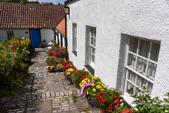 Cramond 07 July 2018 00002.jpg (JamesPDeans.co.uk) Tags: cramond forthemanwhohaseverything landscape edinburgh plants gb printsforsale colour white cobbles windows roofs jamespdeansphotography gardens roads unitedkingdom tiles nature scotland britain flowers greatbritain wwwjamespdeanscouk roof architecture landscapeforwalls lothian europe uk digitaldownloadsforlicence