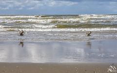 0LM_1281 (laurencemasson1) Tags: kitesurf plage merdunord nordzee nederlands paysbas lumière ciel nuages