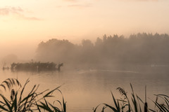 (CarolienCadoni..) Tags: ilca sonyilcaa99m2 sony sal2470f28 2470mmf28zassm sal2470z mist misty mistymorning swans sunrise light sun foggy trees landscape water nederland holland netherlands
