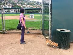 NO DOGS ON FIELD (jmhull.LA) Tags: california palosverdesestates southbay dog corgichihuahua chihuahuacorgi chorgi
