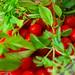 Tomates & basilic... _DSC4320