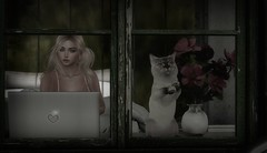 Kitty Breakout (larisalyn (Rachel)) Tags: kitty pussy secondlife window laptop beautifulblonde flowers home house cottage vintage cat