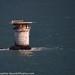 Mile Rock Lighthouse 9-2018