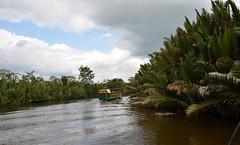 Klotok on its way to Tanjung Puting National Park, (josepsalabarbany) Tags: borneo kalimantan indonesia jungle wildlife monkey orangutan proboscismonkey nasalislarvatus tanjungputing river riu nationalpark boat klotok barca