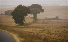 Presque l'automne (afantelin) Tags: arbres brouillard route paysage chalopin yonne bourgogne burgundy champ