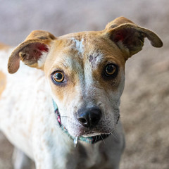 Lighting15Sep201828.jpg (fredstrobel) Tags: dogs pawsatanta atlanta usa animals ga pets places pawsdogs decatur georgia unitedstates us