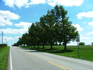 Property Line Trees