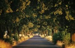 long unwinding road (paddy_bb) Tags: paddybb road strasse deutschland germany sun ostdeutschland allee