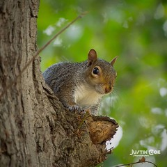 Squirrel resting in the tree after but hunting #squirrel #moose #supernaturaltumblr #supernaturalfamily #squirrels #squirrelsofinstagram #supernaturalseason12 #squirrellife #cas #spn11 #alwayskeepfighting #spnfamily #squirrellove #deanwinchester #jensenac (justin.photo.coe) Tags: ifttt instagram squirrel resting tree after but hunting moose supernaturaltumblr supernaturalfamily squirrels squirrelsofinstagram supernaturalseason12 squirrellife cas spn11 alwayskeepfighting spnfamily squirrellove deanwinchester jensenackles supernaturalfacts supernaturalfandom dean samwinchester jaredpadalecki sam spn spnfandom supernaturalfans mishacollins justinphotocoe
