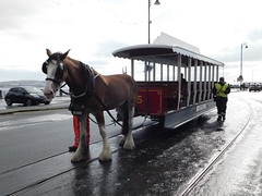 Douglas Bay Horse Tramway: Bobby and Car 45, Sea Terminal (28/07/2018) (David Hennessey) Tags: douglas bay horse tramway bobby car 45 sea terminal