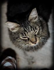 Sitting feline. (CWhatPhotos) Tags: cwhatphotos cat sitting pussy turkish turkey marmaris feline animal sit