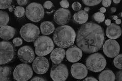 untitled (Binacat) Tags: canon eos 750d berlin eichwalde wald woods forest nature natur wood holz baumstamm trunk tree baum bnw schwarzweis blackandwhite bw trees bäume outside