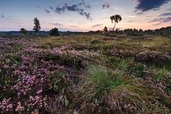 IMG_1360-HDR (Calabrones) Tags: kendlmühlfilzen chiemsee chiemgau bayern oberbayern deutschland hochmoor moor heidekraut heide morgenlicht sonnenaufgang heideblüte