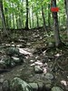 Please stay on the marked trail (skreechowl2003) Tags: forests woods sticks roots sky mud dirt green shadows sunlight branches brush trees boulders rocks path pathway trail