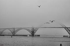 Yaquina Bay Bridge (creepingvinesimages) Tags: hmm monchrome blackandwhite bw fog seagulls water bridge bay outdoors newport oregon nikon d7000 pse14 topaz boats docks