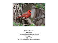 "Cardinal • <a style=""font-size:0.8em;"" href=""https://www.flickr.com/photos/124378531@N04/44317358562/"" target=""_blank"">View on Flickr</a>"
