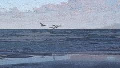 By the Baltic Sea 10 (rimasjank) Tags: baltic tern nature seascape beach