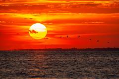 Flock Of Seagulls (Mike Ver Sprill - Milky Way Mike) Tags: flock seagulls sea gulls nature seascape water ocean atlantic highlands fire sky sunset sunrise sun silhouette birds flying beautiful new jersey nj sandy hook mike versprill michael ver sprill tamron 150600 g2 nikon d800 d810
