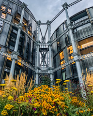 20180807-IMG_1873 Blooms at Gasholder Park (susi luard 2012) Tags: kingscross n1c apartments gasholder london uk