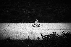 Dalmatian street (iamunclefester) Tags: münchen munich monochrome blackandwhite dalmatian street bike bicycle lines dots dot