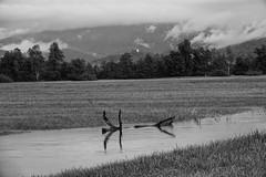 Ljubljansko Barje - Zrnica (Andrej Nagode) Tags: slovenia water landscape vrhnika sonyrx10m4 bnw blackandwhite