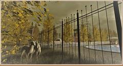 minamikaze180907-1 (minamikaze2010) Tags: autumn tree park furniture decoration dad ~uber~ littlebranch taikou ionic tcf brocante thearcadegacha nomad keke dlab