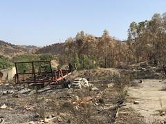 Aftermath of Recent Major Forest Fires - Monchique, Portugal - August 2018 (firehouse.ie) Tags: mountains august2018 portugal algarve monchique forestfire fires fire damage devastation destruction