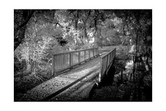 Infra Red with Nikon D200 from the North Texas Scenery Series. (PetrusJohannes) Tags: 850nm wylie texas bridge trees nature blackwhite infrared ir