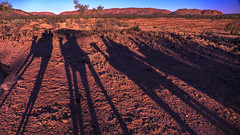 Outback Sunset- Alice Springs, Australia (Flortography) Tags: shadow group camel camels shadows light sunset dusk red pink magenta dirt desert outback australia alicesprings ranch wilderness landscape twilight blue sky iconic lumix panasonic nature colors view travel unique outdoors horizon mountain hills