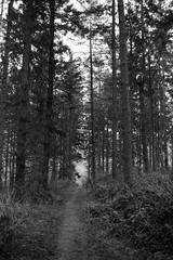 Forest Floor (Alexander Jones - Documentary Photography) Tags: documentary landscape woodland forest photography pool park ruthin north east wales tree trees wood land canopy spring minolta dynax 700 si 700si delta 400 ilford black white monochrome film negative