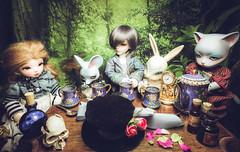 The teaparty (lauradavison) Tags: bjd alice wonderland fantasy mad hatters tea party resin doll yosd fairyland littlefee luna pipos junior pi mouse cheshire cat dollzone rabbit bunny crobidoll lance skull forest
