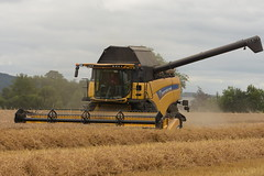 New Holland CX8.70 Combine Harvester cutting Winter Wheat (Shane Casey CK25) Tags: new holland cx870 combine harvester cutting winter wheat grain harvest grain2018 grain18 harvest2018 harvest18 corn2018 corn crop tillage crops cereal cereals golden straw dust chaff county cork ireland irish farm farmer farming agri agriculture contractor field ground soil earth work working horse power horsepower hp pull pulling cut knife blade blades machine machinery collect collecting mähdrescher cosechadora moissonneusebatteuse kombajny zbożowe kombajn maaidorser mietitrebbia nikon d7200