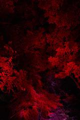 Big' lungs (Christophe-la) Tags: 京都 kyōto kyoto kansai 京都市 kyōtoshi 関西地方 kansaichihō kinki 関西 近畿 近畿地方 kinkichihō culture japan photographiedenuit nuit nightphotography night tadasunomoriatshimogamoshrine shimogamoshrine lightfestival art digitizednature nature digitized 下鴨神社 colours tree trees leaves