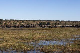 2018_Chobe_River,_Botswana-5