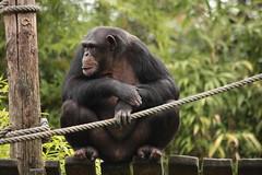 IMG_4271 (gabrielgs) Tags: holiday holiday2018 vakantie2018 camping frankrijk france zoo la fleche lafleche animals dierentuin loire