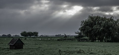 the good days are gone (Wöwwesch) Tags: pasture autumn green grey sky cloudy sunrise light dark morning windy trees sheep hut