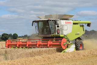 Claas Lexion 670 Terra Trac Combine Harvester cutting Winter Wheat