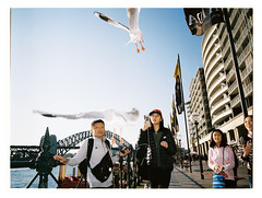 Seagulls i (@fotodudenz) Tags: fuji fujifilm ga645w ga645wi medium format point and shoot film rangefinder 28mm 45mm 2018 120 sydney nsw new south wales australia kodak portra 400 street photography harbour bridge circular quay