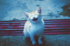 Kitten | CATS // special edition (Robert Krstevski) Tags: robertkrstevski kitty kitten kittens kitties gato gatos cat cats pet pets animal animals smile cute funny catsphotography кошки кошка котка котки moody colors flickr flicker catsofflicker catsofinstagram catsoftwitter furry fur furryfriends paw paws cuteness lachatte nikon nikond3300 мачки мачка