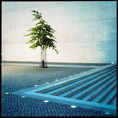 Unfrei (Konrad Winkler) Tags: berlin regierungsviertel baum treppe blau grün beton langzeitbelichtung hasselblad503cx mittelformat 6x6 kodakportra160 epsonv800 eiche