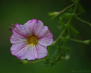 Denise's Flowers_4084