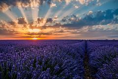 Violet sunset... (Valensole) (Ondablv) Tags: flower lavanda viola violet violetto profumo purple lilla lillac profumati campi lavender provenza provencia provencal valensole francia france country hills color macro ondablv closeup cielo nuvole cloudy azzurro shadow silhouette tramonto sunset