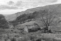 Hellot Scales Barn, Casterton Fell, Yorkshire Dales National Park, Cumbria, UK (Ministry) Tags: hellotscales barn casterton fell easegill yorkshire dales nationalpark cumbria uk leck beck limestone ruin drystonewall dry stone wall corrugated metal grass landscape tree cloud monochrome blackandwhite