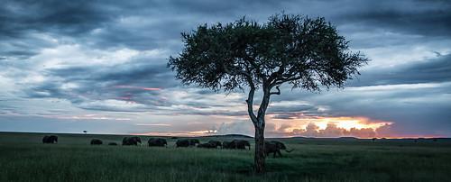 Masai Mara Family Sunset
