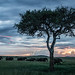 Masai Mara Family Sunset